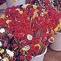 Dried Flowers from Nagaland