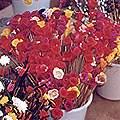 Dried Flower craft