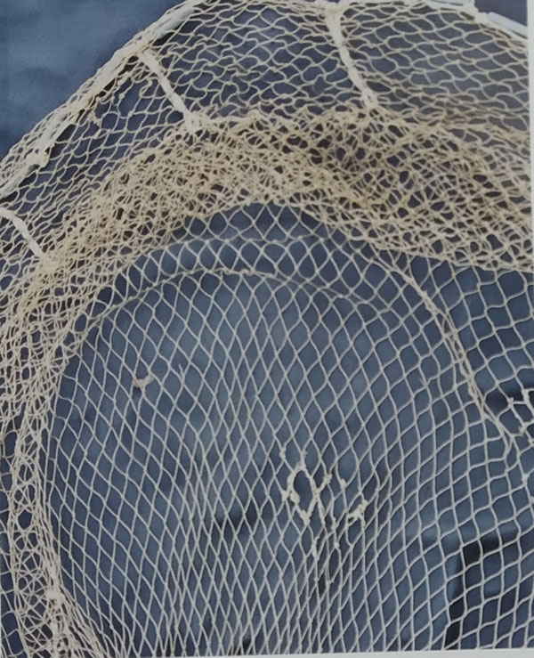 Fishing Net of Dadra and Nagar Haveli