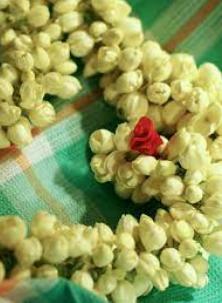 Garland Weaving Malligai/ Jasmine of Madurai, Tamil Nadu